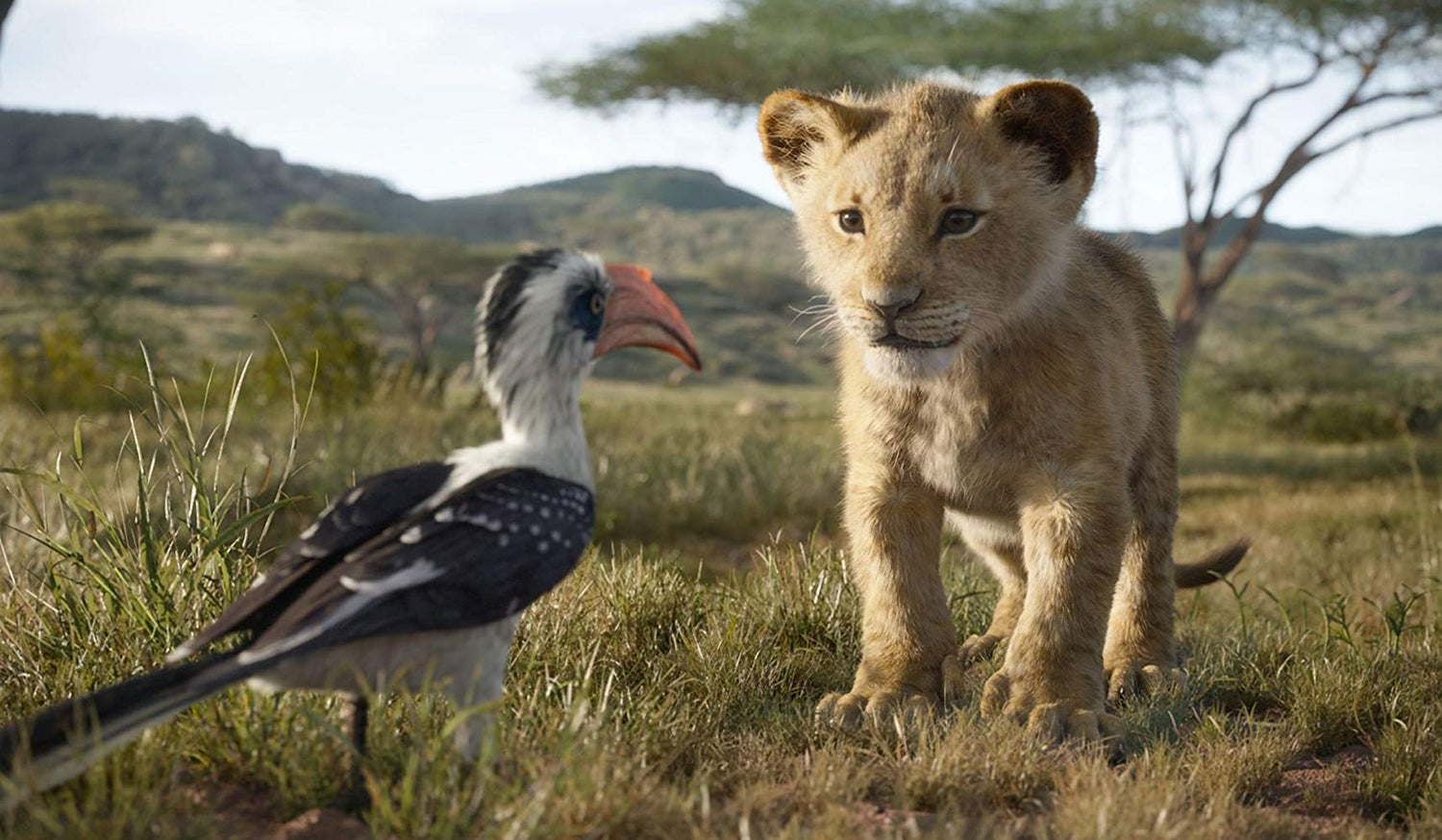 "Scene from ""The Lion King"""