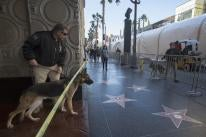 Bomb sniffing dogs sweep areas along Hollywood Boulevard before the start of a premiere
